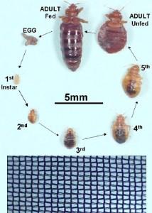bedbug netting