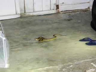 snake tent